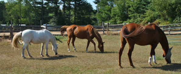 Nipper Knolls Veterans Equine Program